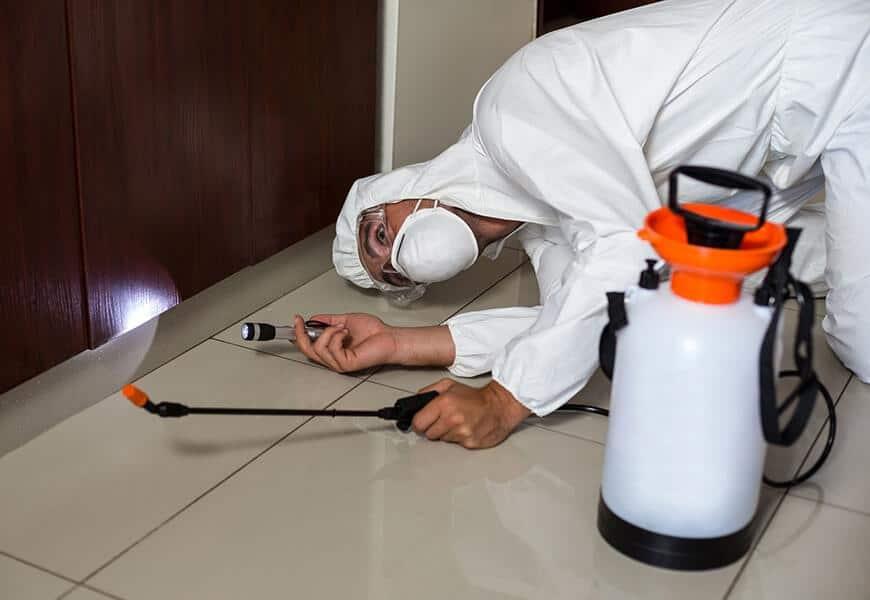 control de plagas en viviendas