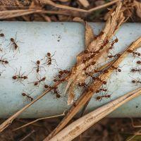 eliminación de plagas de hormigas en madrid